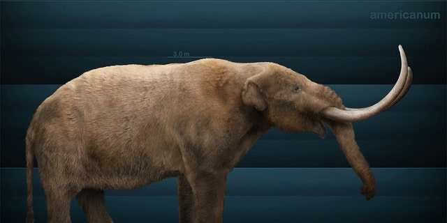 An artist's impression of the American Mastodon, an extinct creature that roamed North American about 3.7 million years ago.