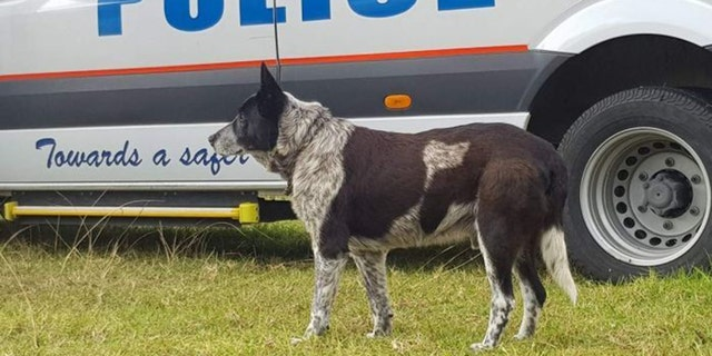 Max has now been declared an honorary police dog.