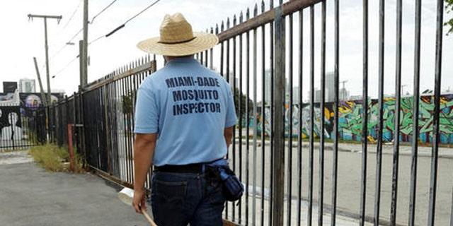 An inspector with the Miami-Dade County mosquito control department, looks for standing water as he inspects an empty lot, Tuesday, Aug. 2, 2016 in the Wynwood neighborhood of Miami. The CDC has advised pregnant women to avoid travel to this neighborhood where mosquitoes are apparently transmitting Zika directly to humans. (AP Photo/Lynne Sladky)