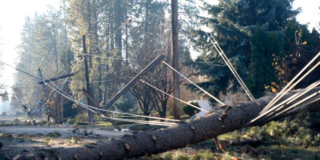 Nov. 21, 2015: Fallen trees lie across downed power lines on a street in Spokane, Wash., in the aftermath of a windstorm that hit the area on Tuesday, Nov. 17. (Jesse Tinsley/The Spokesman-Review via AP)