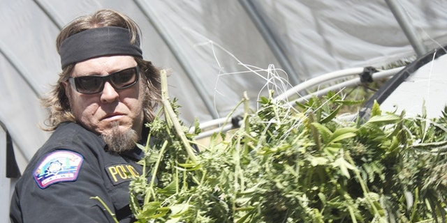 """A scene from the new Discovery Channel show """"Pot Cops."""""""