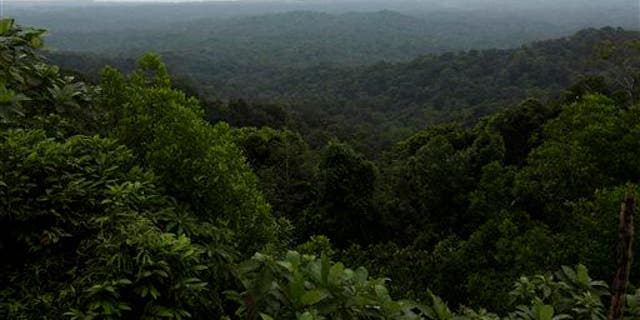 A rainforest in Panama.