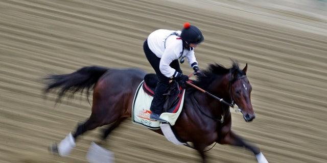 May 16, 2013: Kentucky Derby winner Orb, with exercise rider Jennifer Patterson aboard, gallops during a workout at Pimlico Race Course in Baltimore.