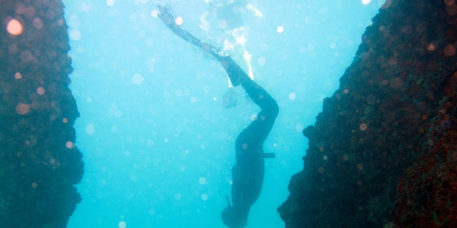 In this Dec. 1, 2013 photo, on a single breath of air, freediver Roberto Reyes begins his practice plunge to 65 feet deep off Aguadilla, Puerto Rico. Freediving fans say it's an adrenaline rush to plunge without an oxygen tank to staggering depths, using weights or relying on gravity alone, and see how long they can remain underwater before what can be the hardest part: coming back up. âIt looks very simple, but it goes beyond that,â Reyes said. âIf you do it once, it's addictive. It feels so good that your body is asking you to return to the ocean.â (AP Photo/Ricardo Arduengo)