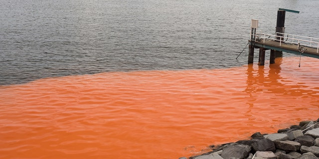 A red tide.