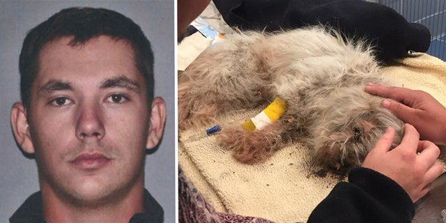 A Massachusetts man was reportedly arrested on Sunday after he allegedly buried an 18-year-old dog alive because it didn't get along with his cat.