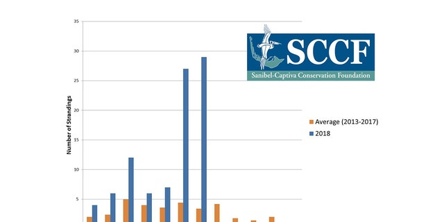 A graph showing the number of sea turtle strandings in recent months.