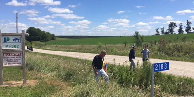 Search crews comb through ditches near the pig farm.