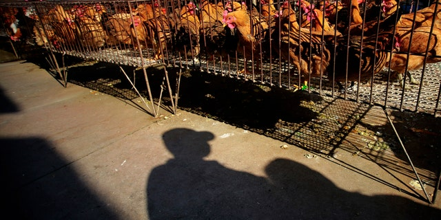 A vender stands near chicken cages at a chicken whole sale market in Shanghai, China. China's financial capital, Shanghai, on Tuesday activated an emergency response plan following the recent deaths of two men from a lesser-known strain of bird flu.