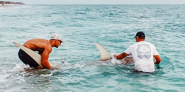 Sudal has caught and release more than 500 sharks since he became a shark hunter four years ago.