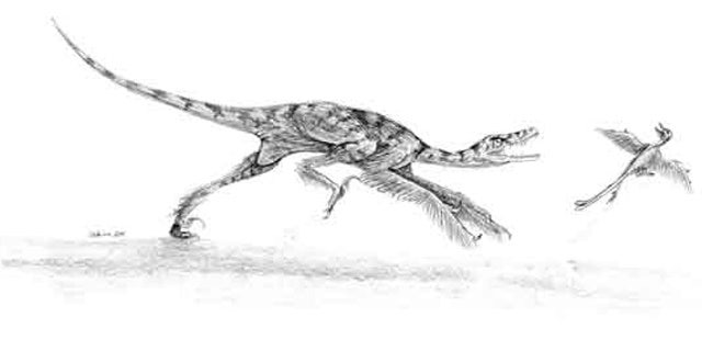 The dinosaur Sinornithosaurus (left) might have used venom delivered with its teeth to help it hunt birds.
