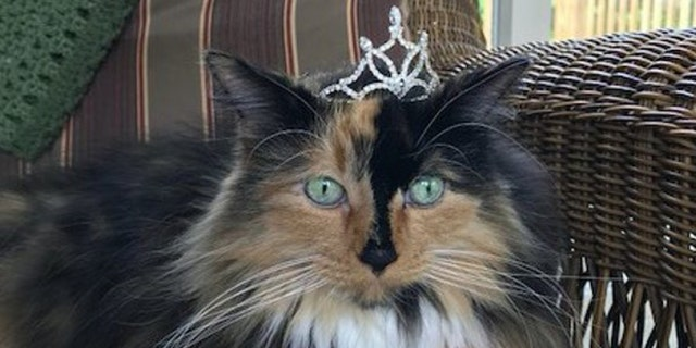 Sweet Tart McKee was elected as the newest mayor of Omena, Michigan.