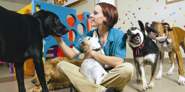 This undated photo provided by Best Friends Pet Care shows an unidentified employee playing with the pets at the Best Friends Pet Care center in White Plains, New York.