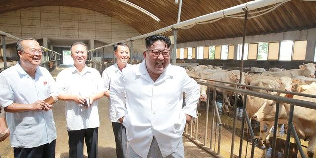 Kim Jong Un at a cattle farm