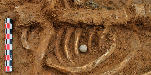 A musket ball placed between the ribs of the skeleton of a soldier killed in the Battle of Waterloo, is pictured at the site where the bones were found in Waterloo.