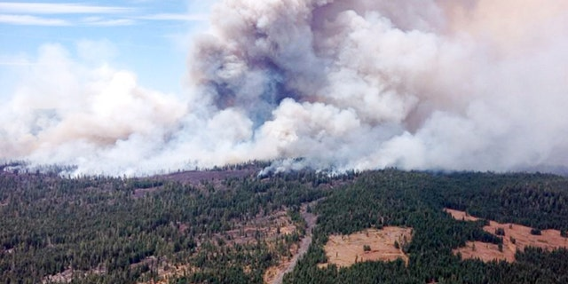 August 1, 2014: This photo provided by the U.S. Forest Service shows the  Eiler Fire burning near Old Station, California. (AP/U.S. Forest Service)