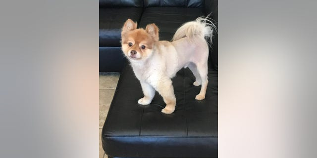 The dog named Alejandro died Wednesday during a layover at Detroit Metropolitan Airport after a Delta flight from Phoenix, Ariz.