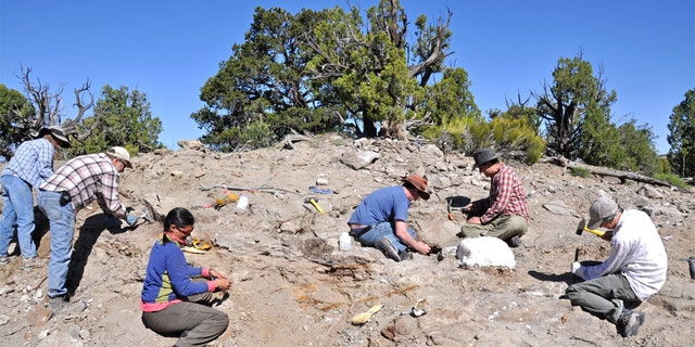 A Natural History Museum of Utah field crew excavate bones from the skeleton of Akainacephalus johnsoni in 2009.