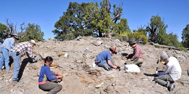A Natural History Museum of Utah field crew excavate bones from the skeleton of Akainacephalus johnsoni in 2009.