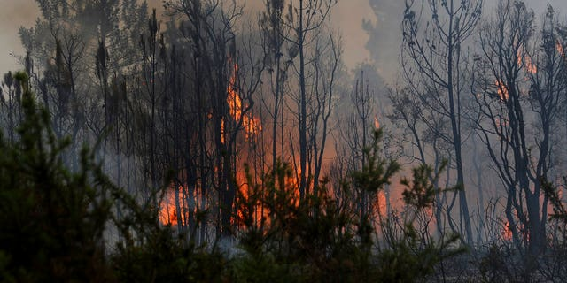 At least 63 people have been killed as a result of the deadliest wildfire in Portugal's recorded history.