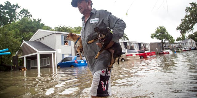 Dogs being evacuated during Hurricane Harvey.