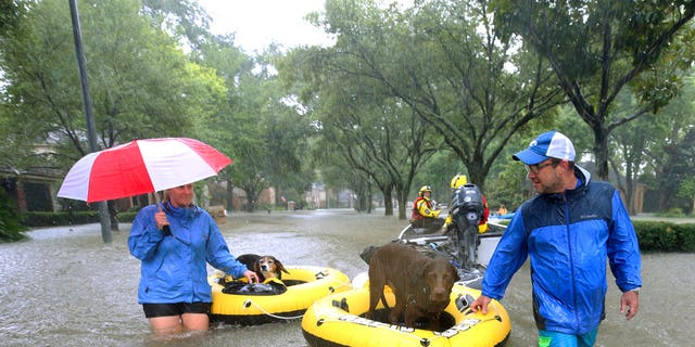 Residents and pets evacuate Houston during Harvey.