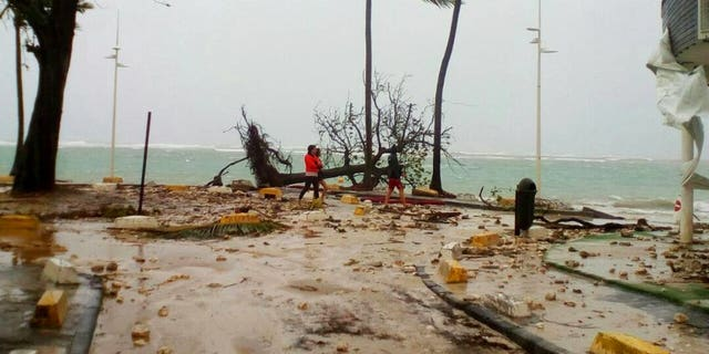 People walk by a fallen tree off the shore of Sainte-Anne on the French Caribbean island of Guadeloupe, early Tuesday, Sept. 19, 2017, after the passing of Hurricane Maria. (AP Photo/Dominique Chomereau-Lamotte)