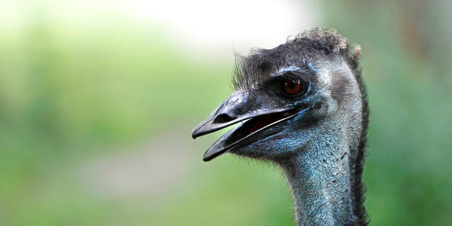 An emu was among the nine animals killed in the weekend attack.