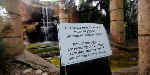 The jaguar habitat was closed for officials to fix the hole in the fence.