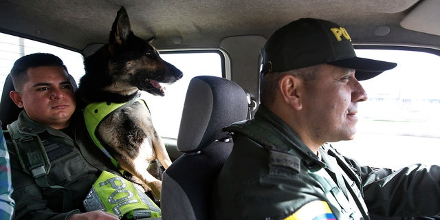 Colombian police recently revealed that the Gulf Clan, a cartel that boasts its own guerrilla army, has offered a reward of $70,000 to whoever kills or captures the savvy hound.