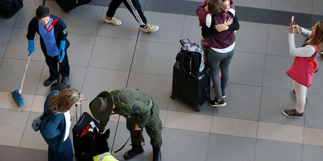 Drug dog Sombra inspects a suitcase at the El Dorado airport in Bogota, Colombia
