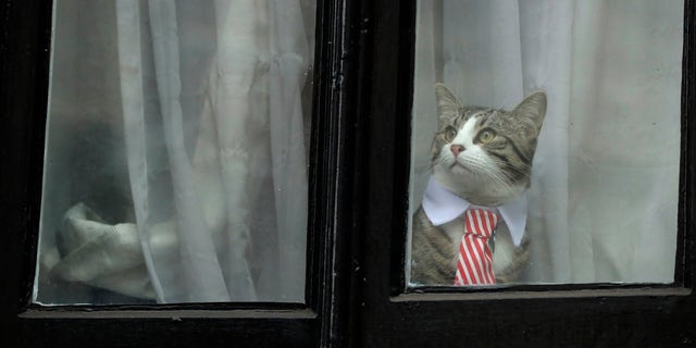 Assange's cat on Monday.
