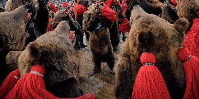 The annual bear ritual gathering in Comanesti.