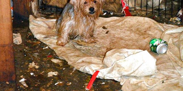 The scene where over 170 Yorkshire terrier and Yorkie mix dogs were discovered in Poway.