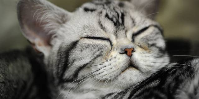 "For cats, a ""slow blink"" is like a smile, researchers said. (Alex Milan Tracy/Sipa USA)"