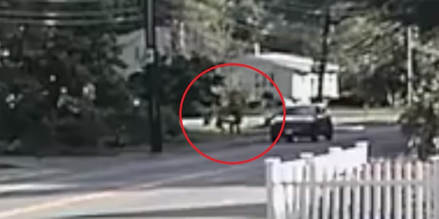 The female jogger can be seen fighting off the attempted kidnapper while on her morning jog.