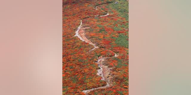 Hikers walk through autumn leaves near the summit of Mount Kurikoma in Kurihara, Miyagi Prefecture, northeastern Japan, Saturday, Oct. 8, 2011. (AP Photo/Kyodo News) JAPAN OUT, MANDATORY CREDIT, NO LICENSING IN CHINA, FRANCE, HONG KONG, JAPAN AND SOUTH KOREA