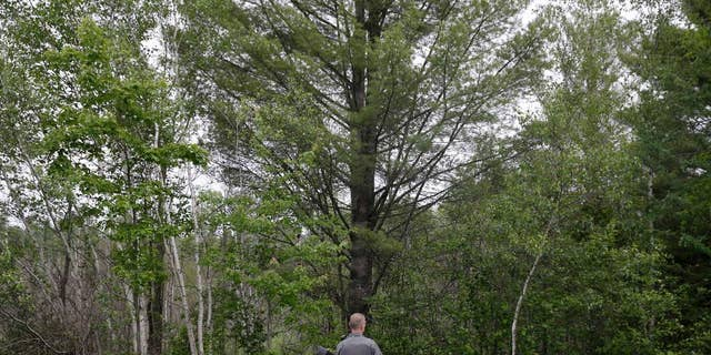 A law enforcement officer stands on a road and looks into the forest near Dannemora, N.Y., Friday, June 12, 2015.