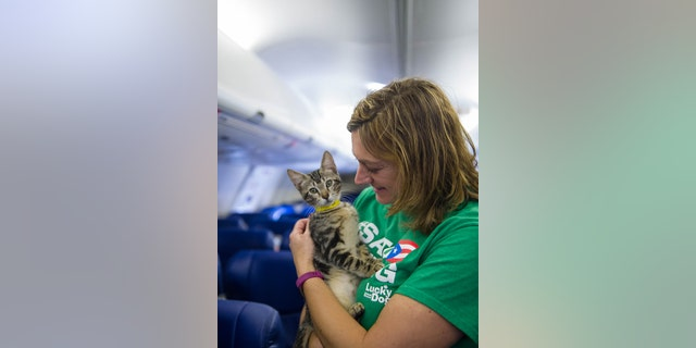 The plans for the furry flight were set in motion after Lucky Dog emailed Southwest's CEO.