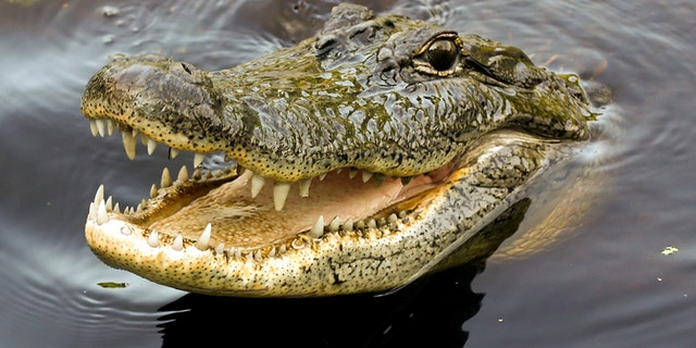Nearly 300 crocodiles were slaughtered after a local villager was killed in an attack at a breeding sanctuary.