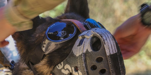 """File photo - Staff Sgt Buri, a Military Working Dog for the 131st Military Working Dog Detachment, 709th Military Police Battalion, 18th Military Police Brigade out of Grafenwoehr, Germany, dons K9 eye protection or """"Doggles"""" to protect his eyes from flying debris created by the winds of the Medevac helicopter during K9 hoist training August 1, 2017 on Camp Bondsteel, Kosovo. (U.S. Army photo by Staff Sgt. Nicholas Farina)"""