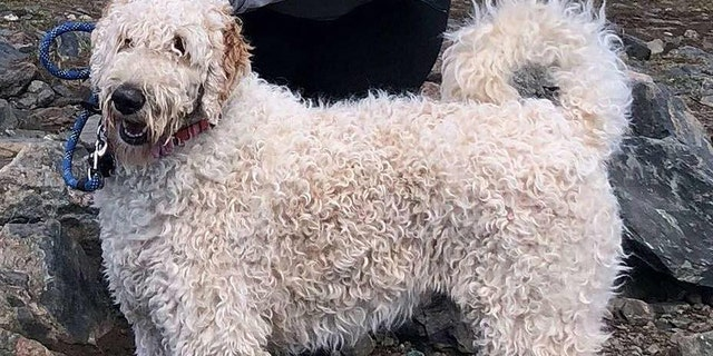 One-year-old Bentley was reunited with his owner after surviving for three weeks in the Colorado mountains.