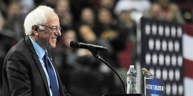 Democratic presidential candidate Sen. Bernie Sanders, I-Vt., smiles as a bird lands on his podium as he speaks during a rally at the Moda Center in Portland, Ore., Friday, March 25, 2016. (AP Photo/Steve Dykes)