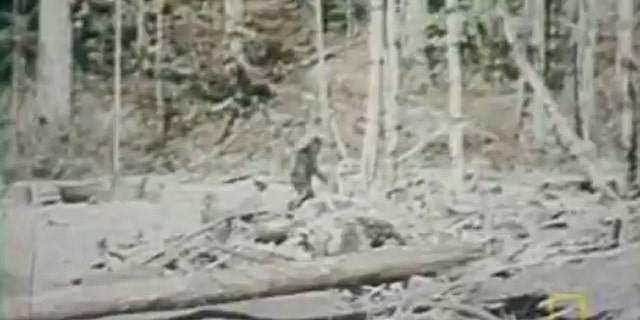 File photo: A still image of the infamous 1967 Roger Patterson film which appeared to show Bigfoot on film. (Credit: YouTube)  (YouTube)