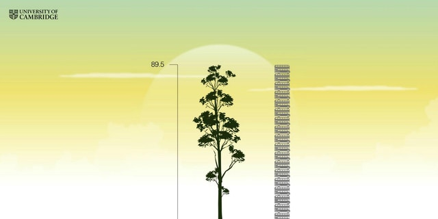 A yellow meranti tree found in Malaysia is estimated to stand as tall as 20 double-decker buses stacked on top of one another, as visualized in this scene from a University of Cambridge animation.