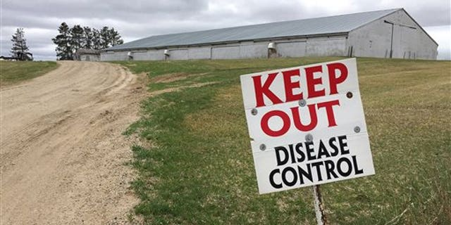FILE - This April 20, 2015 file photo shows a sign warning visitors to stay away outside an infected turkey farm in Melrose, Minn. (Kirsti Marohn/The St. Cloud Times via AP, File)
