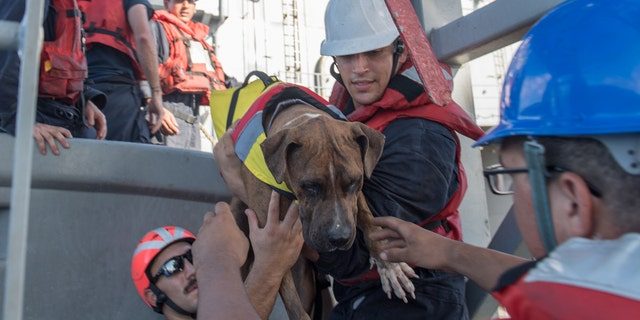 Sailors help Zeus, one of two dogs who were accompanying two rescued mariners, board the USS Ashland, Oct. 25, 2017.