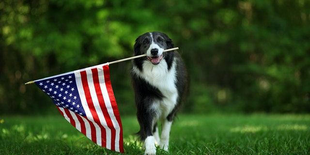 Get your pet ready for their patriotic close up.