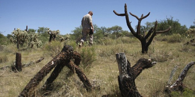 Border Patrol Agent Paul Du Bois searches for evidence from illegal immigrants along a dirt road in Pima County, Ariz., Aug. 17, 2009. (Reuters Photo)