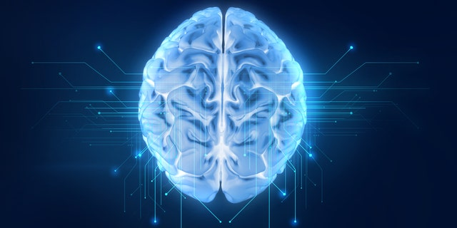 The human brain evolved to have two halves — and a new review of previous research suggests that this dual design may confer special benefits.